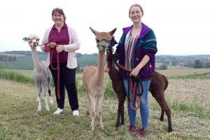 Alpakahof Ausham - Freizeit und Produkte mit und von Alpakas - Gutscheine für Alpakawanderungen erhältlich.