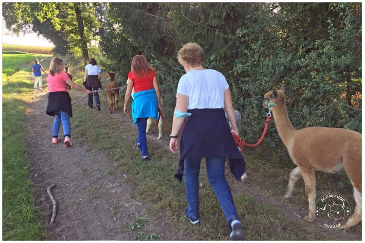 Alpakahof Ausham - Wandern mit Alpakas